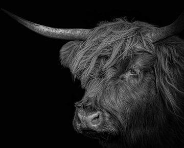 Schottischer Highlander in Schwarz-Weiß von Marjolein van Middelkoop