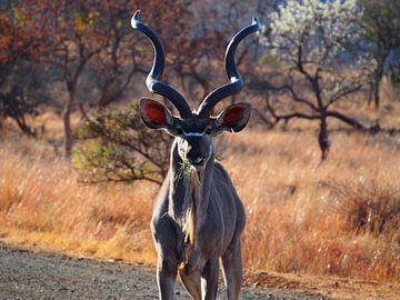 Kudu von Marleen Berendse