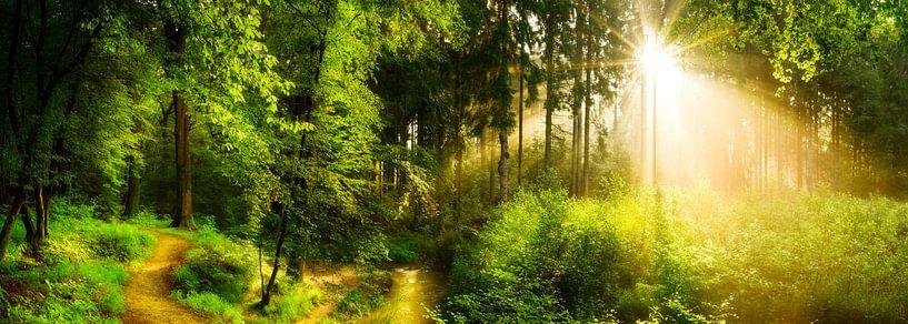 Bosweg naast een beekje van Günter Albers