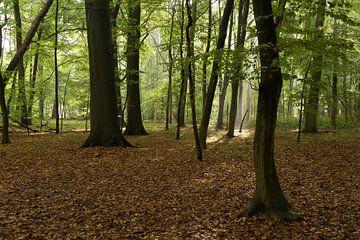 Bos van Nieuw Amelisweerd van Marijke van Eijkeren