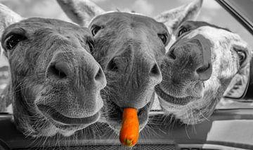 Ezeltrio   Donkey threesome   Esel Trio   Trio d'ânes van Pauline Duchene
