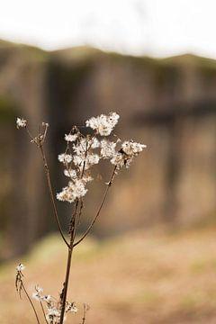 Stilleven van een bloem van Isa Blom