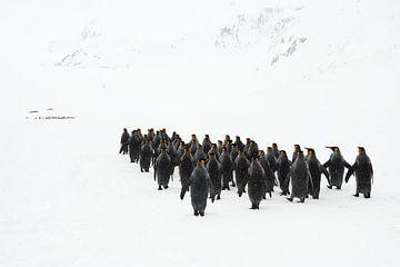 Der Pinguin-Marsch von Jos van Bommel