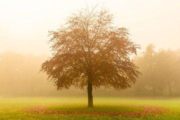 Boom met een cirkel van gevallen bladeren in de mist van Sjoerd van der Wal