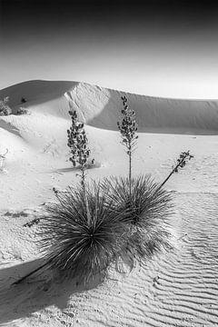 Wit Zand Indruk | Monochroom van Melanie Viola