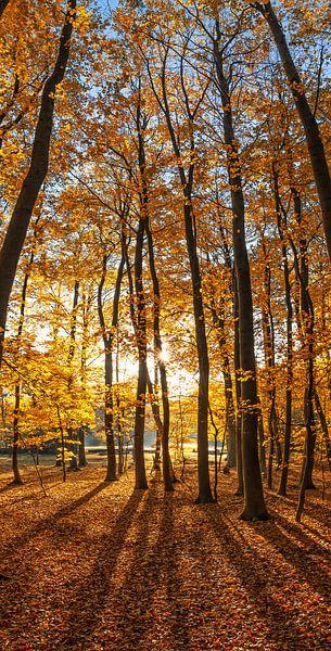 Herfst op Texel /  Autumn on Texel. van Justin Sinner Pictures ( Fotograaf op Texel)