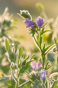 Bloemen met waterdalingen op een ochtend in de zomer van Edith Albuschat