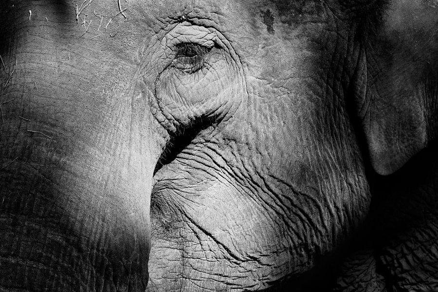 Elefant von Peter Zeedijk