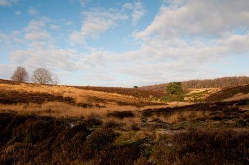 The Posbank, National Park The Veluwezoom - The Netherlands von Tamara Witjes