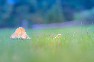 Paddestoel in het hoge gras van Karin van Rooijen Fotografie