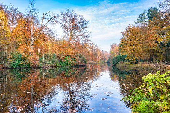 kleurrijk vergezicht met herfstkleuren in de het bos