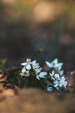 Frühling! von Tessa Dommerholt