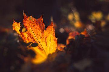 Gouden herfst - helder gebladerte aan de rand van de weg van Jonathan Schöps | UNDARSTELLBAR
