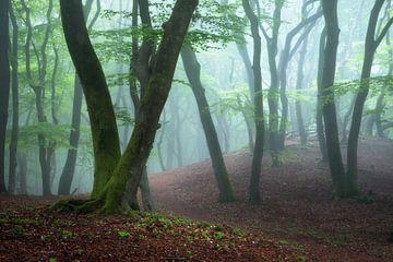 Nebliger Frühlingswald von Ramon Oost