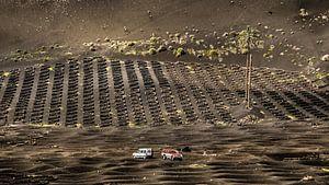 Druiventeelt op Lanzarote