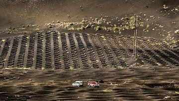 Druiventeelt op Lanzarote van Harrie Muis