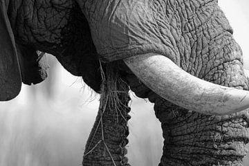 zwart wit olifantslurf in Okavango van Marieke Funke