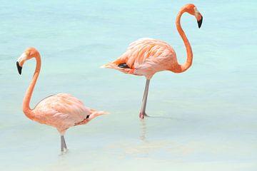 Flamingo's von Willemijn van Donkelaar