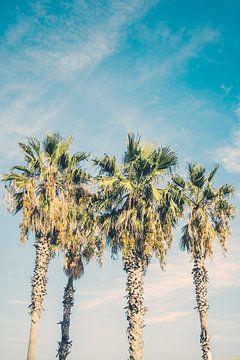 Tropische Palmbomen van Patrycja Polechonska