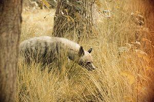 Roofdier Hyena van