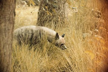 Roofdier Hyena von Thamara Janssen