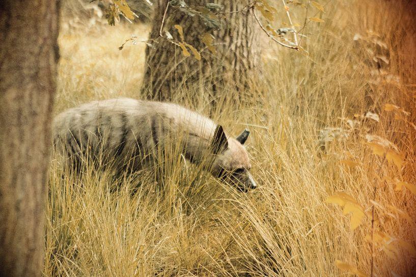 Roofdier Hyena van Thamara Janssen