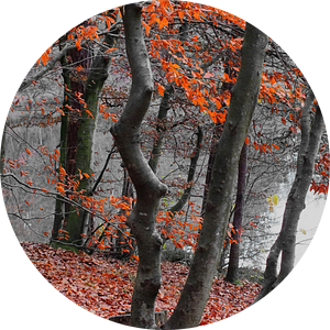 Herfstkleuren III van Ilona Picha-Höberth