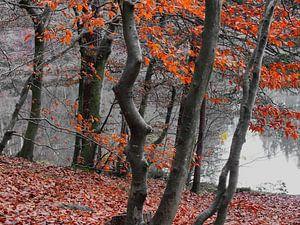 Couleurs d'automne III