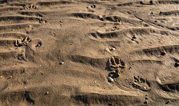Pfote des Hundes im Sand von Percy's fotografie