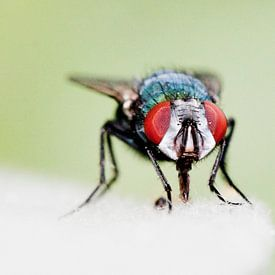Just a Fly van Robbie Veldwijk