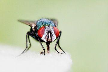 Just a Fly von Robbie Veldwijk