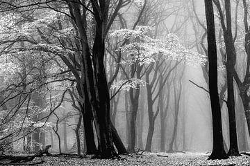 Winter is Coming van Lars van de Goor