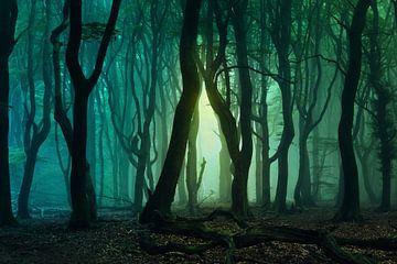 Emerald Forest. von Inge Bovens