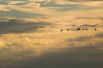 Ganzenvlucht door wolken van Niels Punter