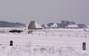 Texel im Schnee von Peter Schoo