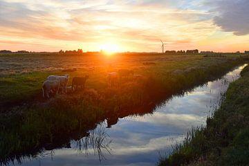 Schapen bij zonsopkomst von Jitske Van der gaast