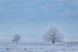 Bevroren mist von Tony Ruiter