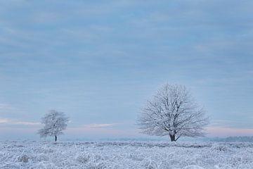Bevroren mist van Tony Ruiter