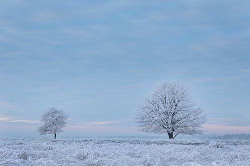 Bevroren mist van