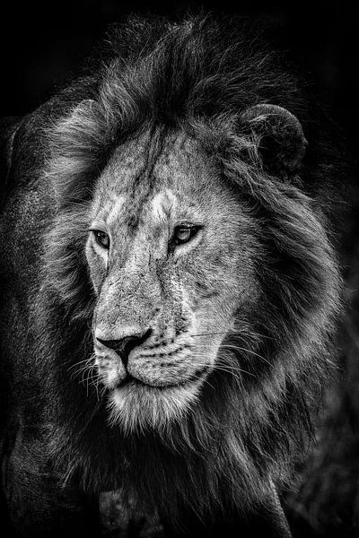 De koning van de dieren van jowan iven