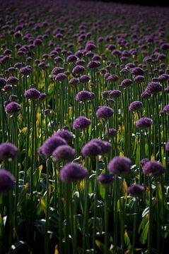 purple bed von Dennis Beentjes