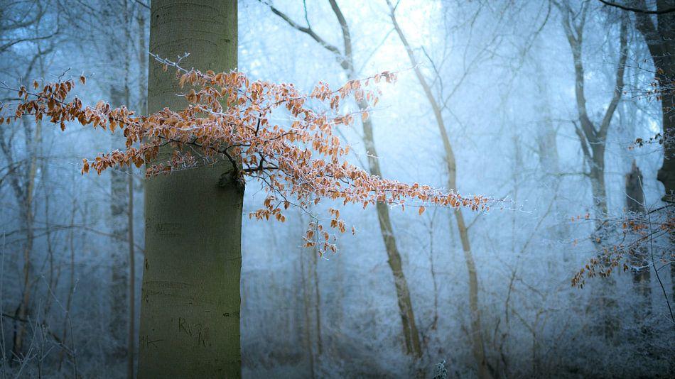 Winter Magic van Niels Eric Fotografie