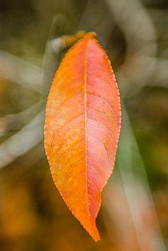 Enkel rood herfstblad aan een takje van Fotografiecor .nl