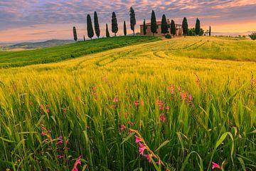 Podere I Cipressini, Toscane, Italië van Henk Meijer Photography