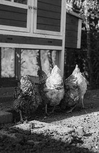 Hühnerstummel von Theo Radings