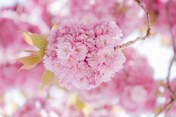 Roze bloemen wolk van Daan van Oort