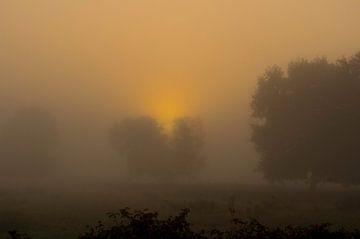 Opkomende zon door de mist