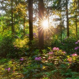 Rododendron bos van Karla Leeftink