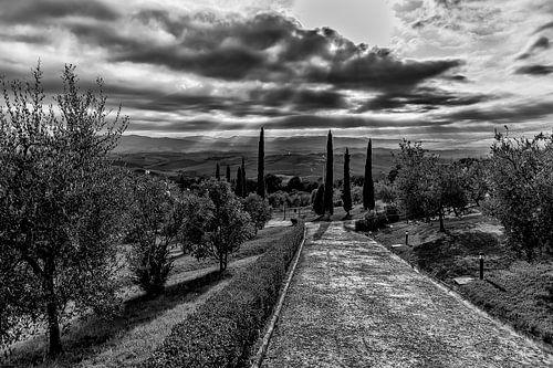 Toscaans cipressen en heuvellandschap