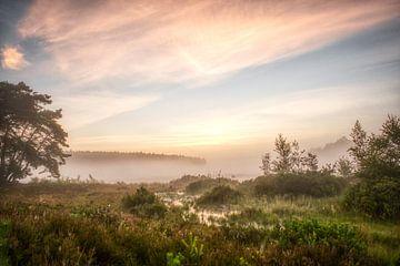 Een mistige zomerochtend in De Teut